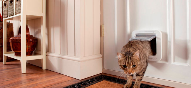 Cat Flaps Cat Condos